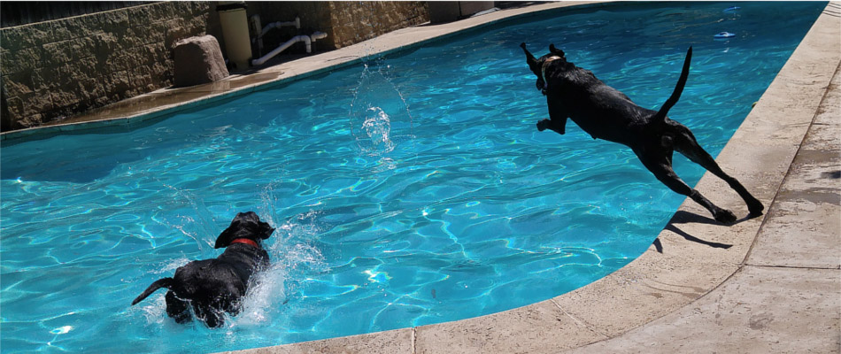 Two dogs playing in the pool at Spring Creek Kennel & Cattery
