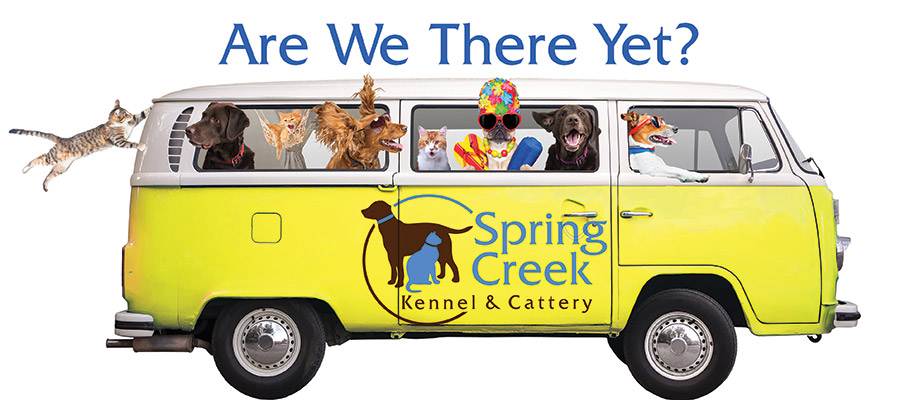Spring Creek Kennel Dogs and Cats in a Car